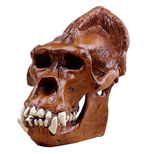 LUCKFY Orang-Utan-Schädel - Resin Figurine Schreibtisch Scientific Skulptur - Abnehmbarer Medizinische Lehre Modell, Wissenschaftliches pädagogisches Spielzeug