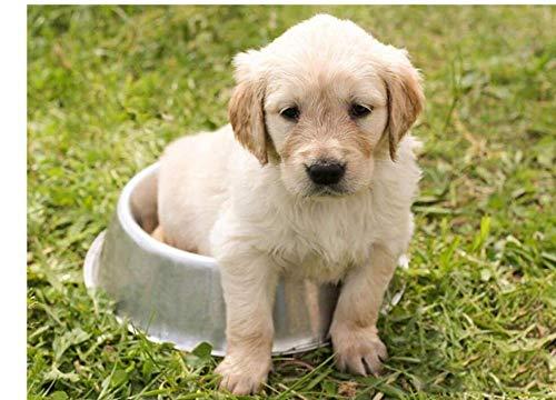 YHKTYV Animal Cachorro En Una Palangana Rompecabezas De Madera 500 Piezas Decoración para El Hogar DIY Regalo Juego De Interior Aliviar Estrés Juego