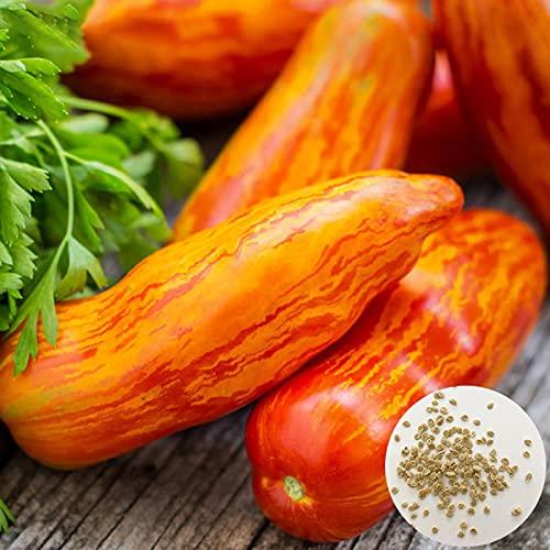 Oce180anYLVUK Semi di pomodoro a strisce, 500 pezzi/borsa Semi di pomodoro a strisce Non OGM Semi di ortaggi rossi facili da piantare Rare Tomato Seeds
