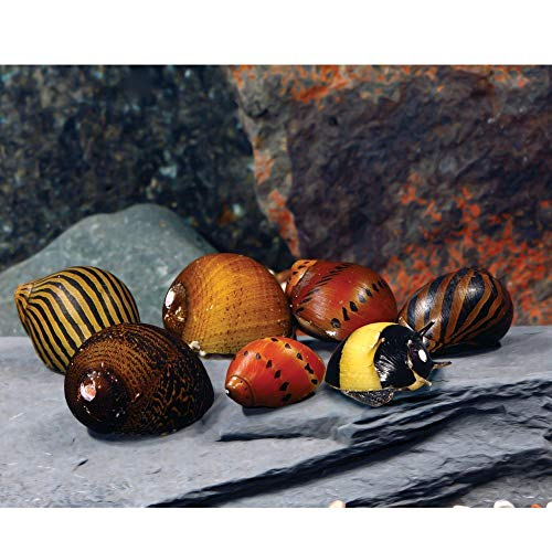 WorldwideTropicals Live Freshwater Aquarium Fish - (6) Varied Nerite Snails - 6 Pack of Mixed Nerites(Zebra, Red Spotted, Horned) - by Populate Your Fish Tank!