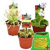 Exotenherz - Set de iniciación Plantas carnívoras - 3 plantas + Suelo especial...