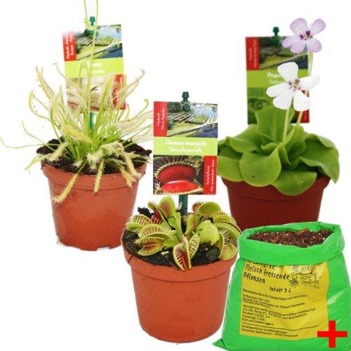Exotenherz - Starter Set Fleischfressende Pflanzen - 3 Pflanzen + Erde - Karnivorenerde
