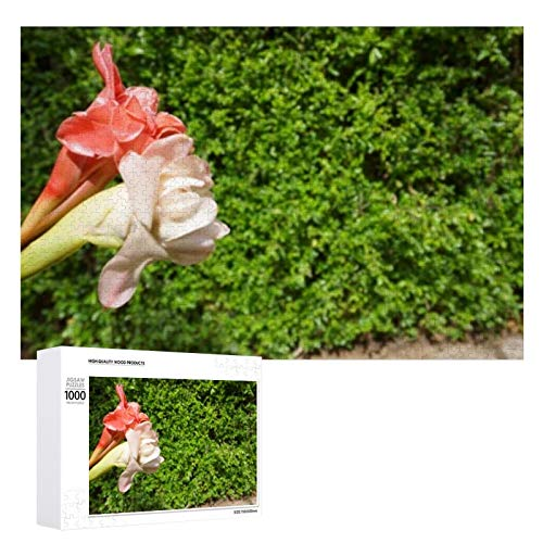 Etlingera Elatior Flowers This Plant - 1000 Jigsaw Puzzles for Adults & for Kids Age 12 Years and up, Multi