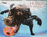 Hunde unter Wasser 2020: Wandkalender