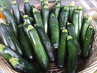 Squash, Summer,Raven Dark Green Zucchini,Organic,Highly Productive ! (100 Seeds) by BasqueStore