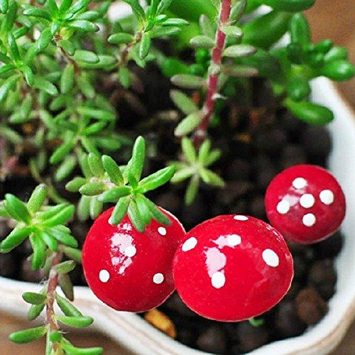Bolange 5PCS Mini Mousse Rouge Petit Champignon Micro Paysage Jardin décor Stakes DIY Design...