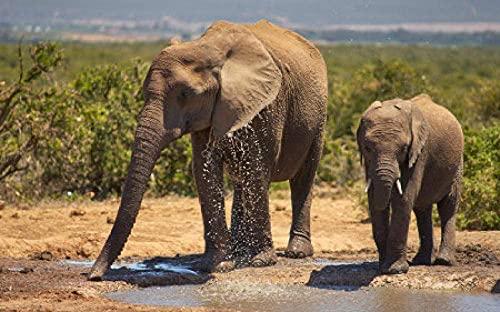 YOFUHOME Korsstygnskit elefant mamma och baby elefant dricksvatten gör-det-själv 11 karat broderi hantverk nålpunktsmönster flerfärgad för startpaket heminredning (förstämplade satser) 40 × 50 cm