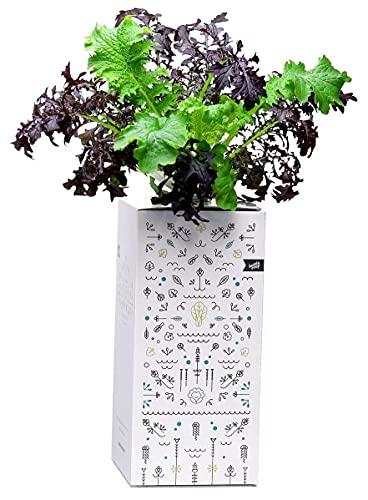 BottleCrop NY 2020 - Färgglad senapsblandning från flaskan Kryddig senap växande system Urban Farming Hydroponic ört fönsterbräda vertikal trädgård hållbar