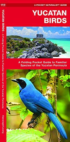 Yucatan Birds: A Folding Pocket Guide to Familiar Species of the Yucatan Peninsula (Pocket Naturalist Guides)