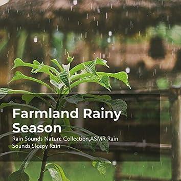 Farmland Rainy Season