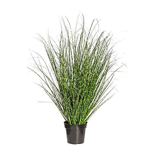 Pflanzen Kölle Miscanthus Zebrinus, ca. 110 cm, im einfachen Kunststofftopf