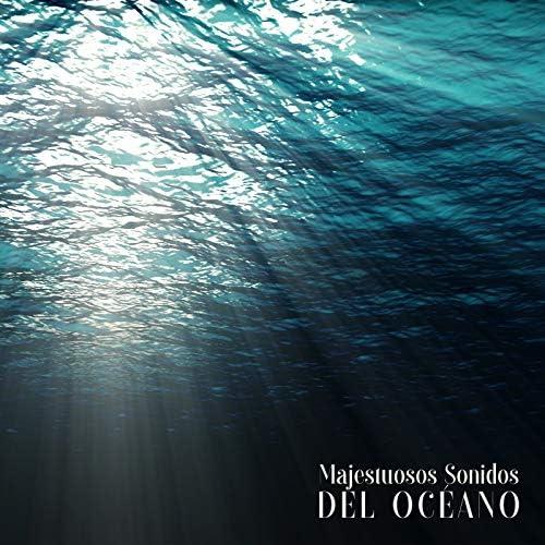Relajacion Conjunto & Majestic Ocean