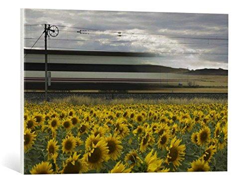 kunst für alle Leinwandbild: Kike Balenzategui 78 Sunflowers - hochwertiger Druck, Leinwand auf Keilrahmen, Bild fertig zum Aufhängen, 75x50 cm