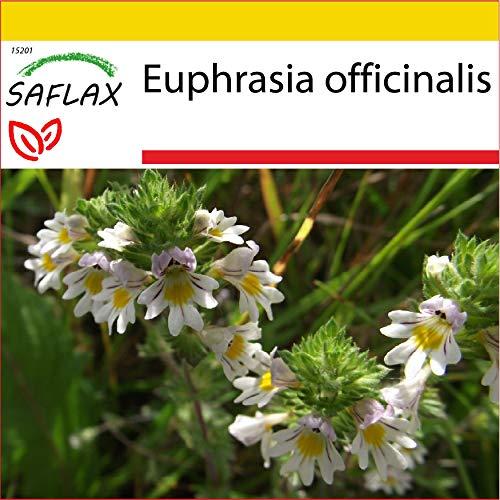 SAFLAX - Anzucht Set - Heilpflanzen - Augentrost - 200 Samen - Mit Mini-Gewächshaus, Anzuchtsubstrat und 2 Töpfen - Euphrasia officinalis
