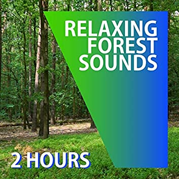 RELAXING FOREST SOUNDS | Bird Songs And Wind | White Noise | Nature Sounds