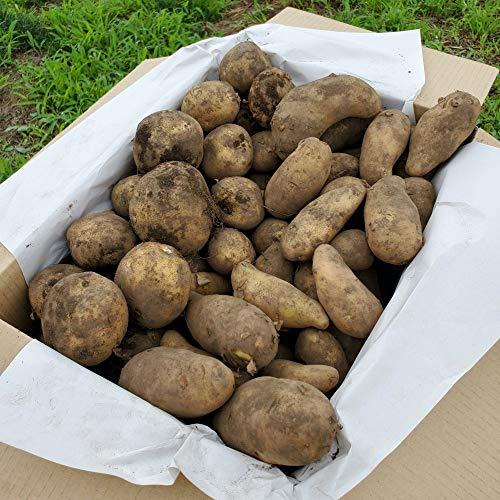 じゃがいも 8~10kg 新じゃが 長野県 あづみ野産 農薬不使用 キタアカリ メークイン (80箱サイズ)