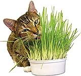 Eco Home Herbe à Chat prêt à Pousser – Sachet de 100g équivalent à 45...