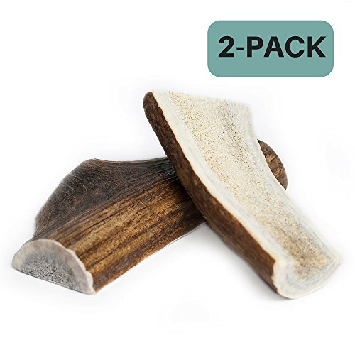 Chipper Critters All Natural Medium Whole Elk Antler