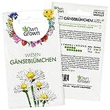 Wiesen Gänseblümchen Samen mehrjährig: Premium Blumen Samen für ca. 400 kleine Wiesengänseblümchen Pflanzen – Blumensamen – Bellis Perennis Samen – Bodendecker Samen winterhart – Saatgut von OwnGrown