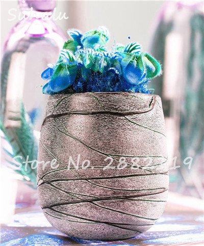 60 Pcs vivaces Nepenthes Seeds Carnivores Venus Fly Trap plus chaud du monde des plantes Graines Bonsai Garden Seed Color Mix Livraison gratuite 8