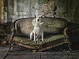 Kempen, A: Furbex: A Dog's Life of Urban Exploration - Alice van Kempen