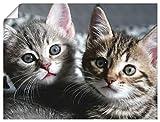 Artland Poster Kunstdruck Wandposter Bild ohne Rahmen 40x30 cm Katze Tiere Katzenbaby Baby Süß Lustig Mädchen T5TN