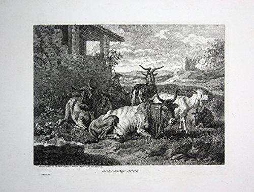 Rinder Herde Ziegen Tiere cow goats Kupferstich engraving