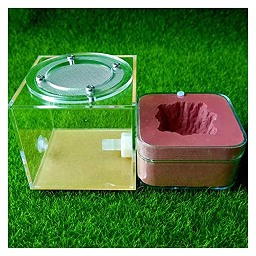 ZOUJIANGTAO JLXL Ant Farm Gusano Lore Ant Castle Gypsum Acrílico Transparente Nido Sistema de alimentación HAB Habitat Ciencia educativa (Color : B, Size : 6.5X6.5X3.5cm)