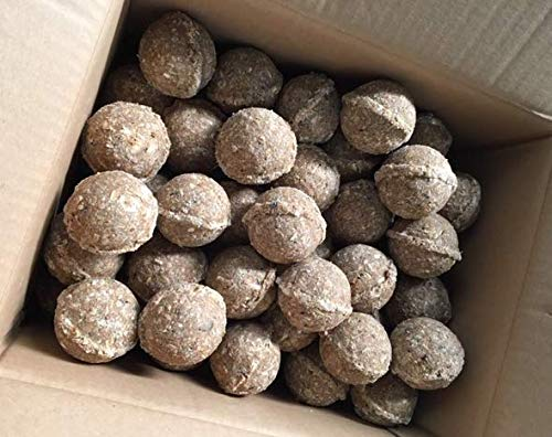 Panto Ganzjahresknödel mit Früchten und Insekten OHNE Netz 100 Stück (Ideal für Futterspender), 9500 g
