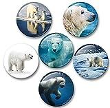 Merchandise for Fans Eisbär in der Arktis - 6 große