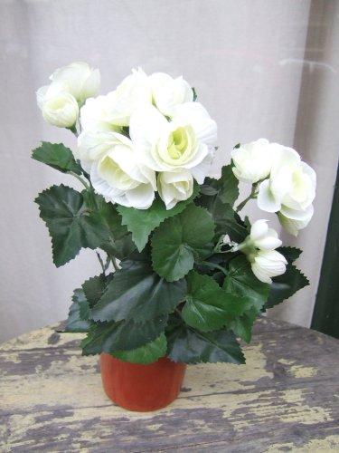Licht & Grün Künstliche Begonien im Topf, 2 Stück mit cremefarbenen Blüten
