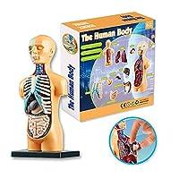 人体胴体モデル、解剖学的胴体モデル、11個の取り外し可能な部品を備えた人体解剖学モデル、解剖学教材、小道具を教えるための科学教室デモンストレーションツール
