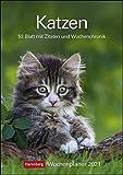 Katzen Kalender 2021: Wochenplaner, 53 Blatt mit Zitaten und Wochenchronik