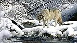 YINGCEFAN Sin Marco DIY Pintura por Números Pint por Número De Kits Pintura Acrilica 40*50 cm Agua Río Nieve Primavera Lobo