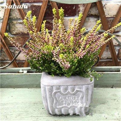 100pcs Belles aromatiques gypsophile Graines vrai étoilées fleurs en pot Gypsophila paniculata All Over The Sky Étoile Bonsai Fleur 7