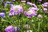 Tutti i nostri semi passano attraverso un processo di controllo della qualità in quattro fasi. STAGE ONE consiste nel selezionare attentamente i produttori e nel controllare le loro colture, compresi i produttori stranieri. Le piante non vengono cont...