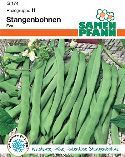 Stangenbohne Neckarkönigin - gerade, zarte, fadenlose, dunkelgrüne, ovale Hülsen