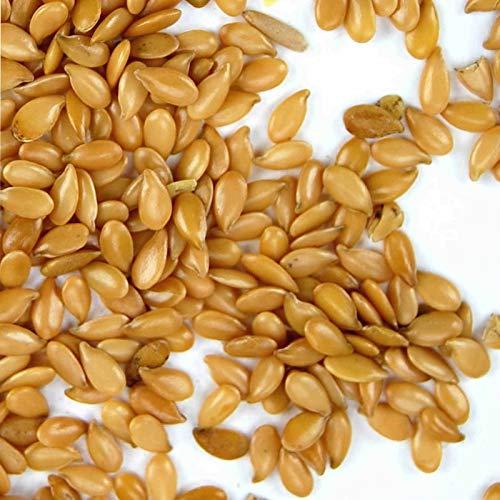 FERRY Bio-Saatgut Nicht nur Pflanzen: 5Can: EN Leinsaat-Bio-Omega 100 Samen 100 Samen 100 Samen - Flax Samen- Yellow Flax