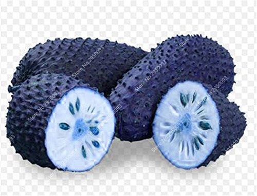 10pcs/sac de sucre rares Graines Bonsai Annona squamosa Plante en pot tête Fruit de Bouddha Crème anglaise Planta Decor Garden 4