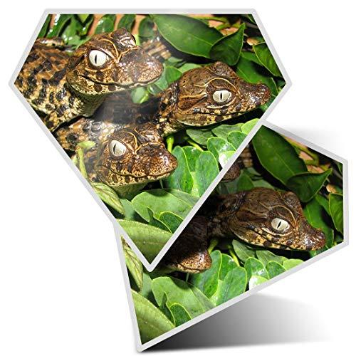 2 pegatinas de diamante de 7,5 cm – Broad Snouted Caiman Cocodrilo Fun Adhesivos para ordenadores...