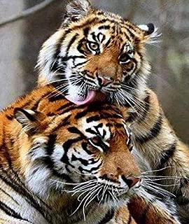 Best diamond dotz white tiger Reviews