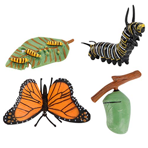 Toyvian 4 Stück Lebenszyklus Zahlen von Schmetterling Insekten Biologie Wissenschaft Modell Spielzeug Pädagogische Figuren Evolution Spielzeug Wachstum Stadium Modell für Kinder