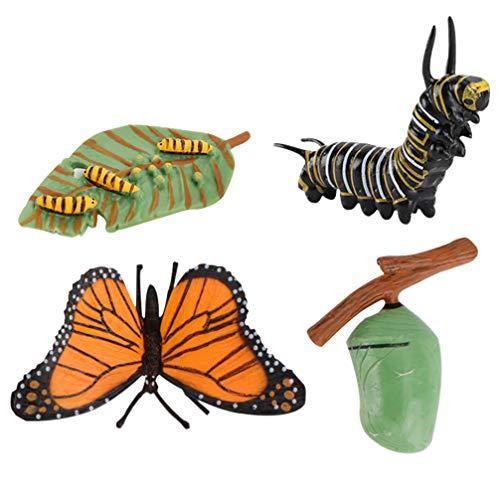 TOYANDONA 4 Pièces Chiffres du Cycle de Vie de Papillon Insecte Biologie Science Modèle Jouets Chiffres Éducatifs Évolution Jouet Croissance Stade Modèle pour Enfants