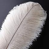 Pluma de la pluma de la avestruz natural 10pcs pluma de 14-16inch (los 35-40cm) para los centros de mesa de la boda decoración del hogar (Blanco)