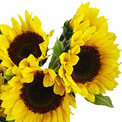 GlobalRose 15 Stems of Sunflowers Brown Center - Fresh Flowers for Delivery from Globalrose