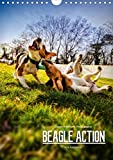 Beagle Action - Wilde Kuscheltiere (Wandkalender 2020 DIN A4 hoch)