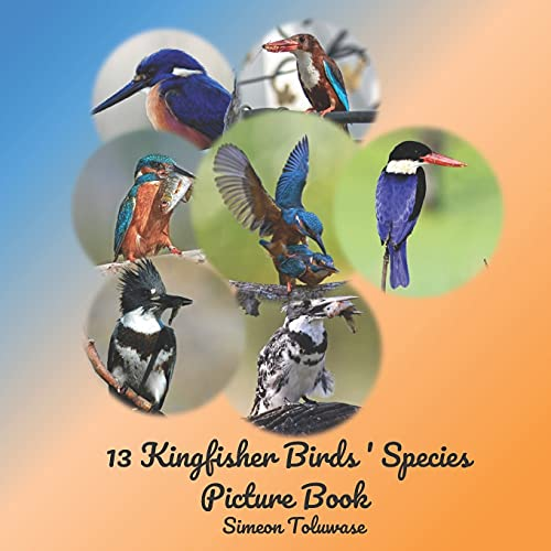 13 Kingfisher Birds' Species Picture Book: Photobook of Kingfisher birds A Coffee Table Book for Bird Watchers Lovers A Gift for Adult seniors ... Collared Black capped kingfisher Songbird