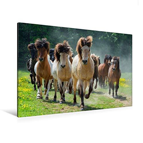 CALVENDO Premium Textil-Leinwand 120 x 80 cm Quer-Format Freilaufende Islandpferde, Leinwanddruck von Angelika Beuck