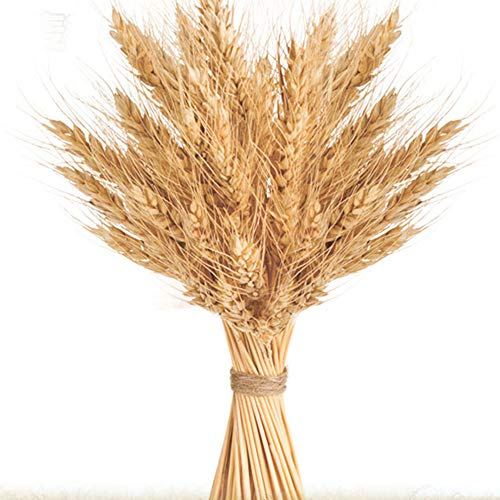 100 Stems Golden Dried Wheat Sheaves Bundle Premium Autumn Arrangements Full Wholesale DIY Home Table Wedding Xmas Decor