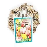 Inter Flower -Tulpen Zwiebeln'Darwin' Mix 11/12, Garten Blumenzwiebeln Pflanzeit Jetzt!! (50)